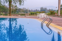 Luxury swimming pool with plam tree in morning.
